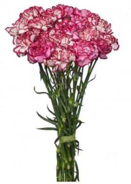 купить цветы дешево интернет магазине
